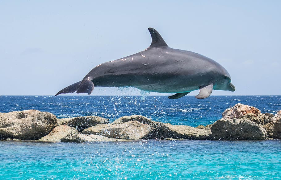 16 Of The Most Amazing Dolphin Pictures 404285923
