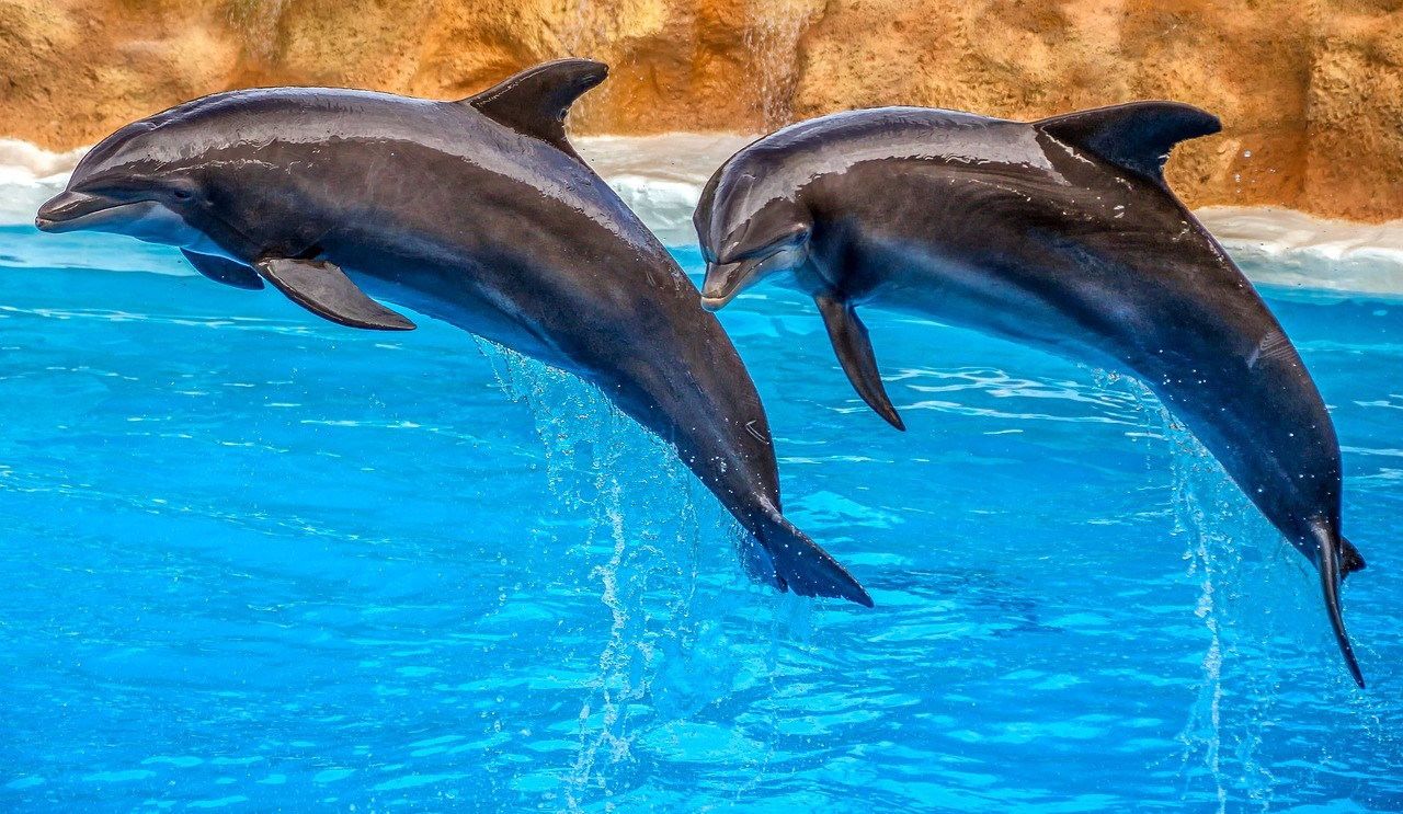 16 Of The Most Amazing Dolphin Pictures 166490468