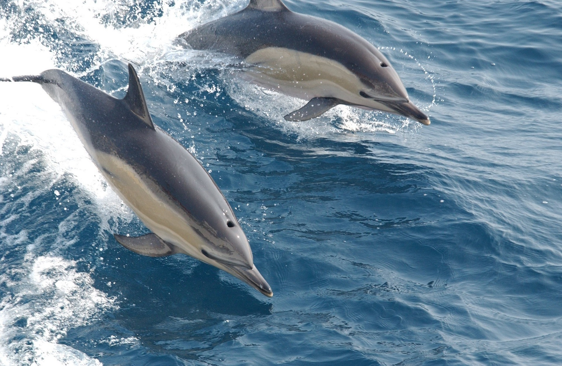 16 Of The Most Amazing Dolphin Pictures 1984124430