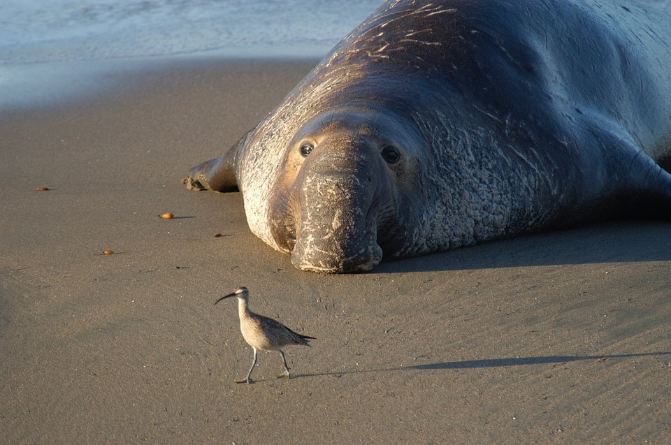 12 Super Cool Elephant Seal Pictures 826061467