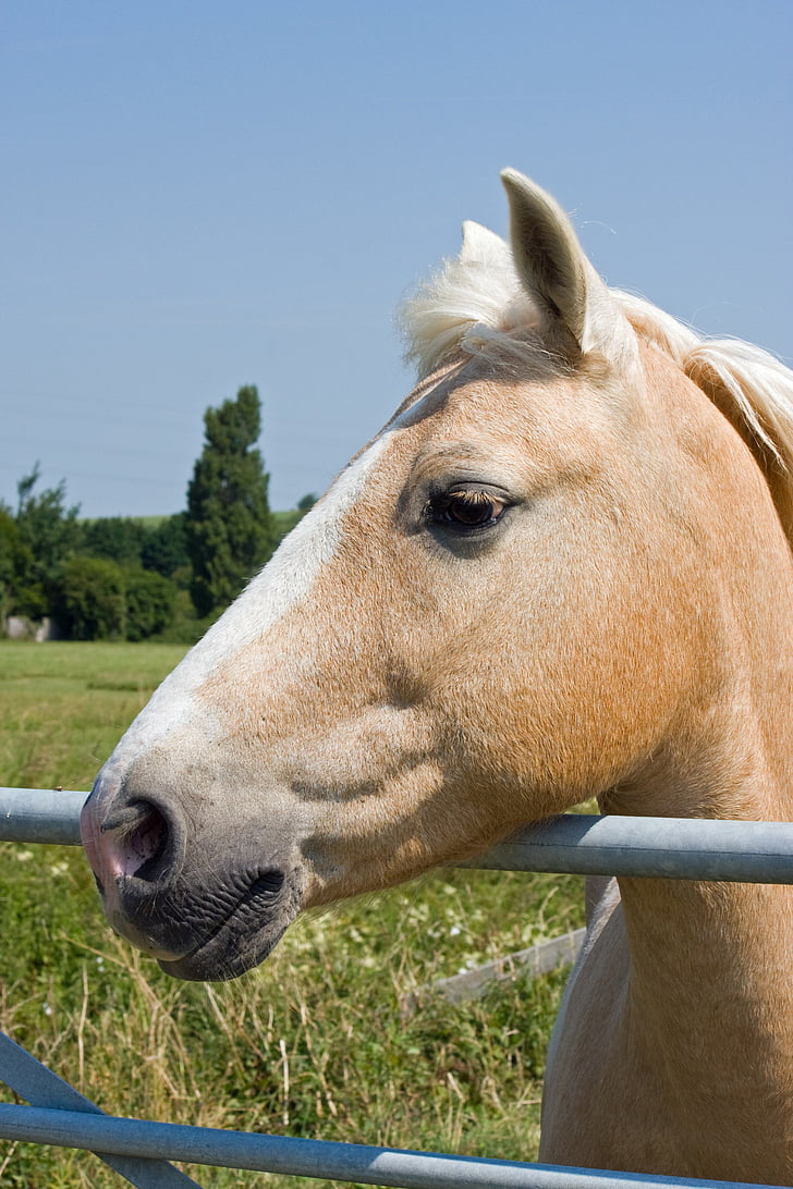 10 Of The Most Awesome Horse Pictures