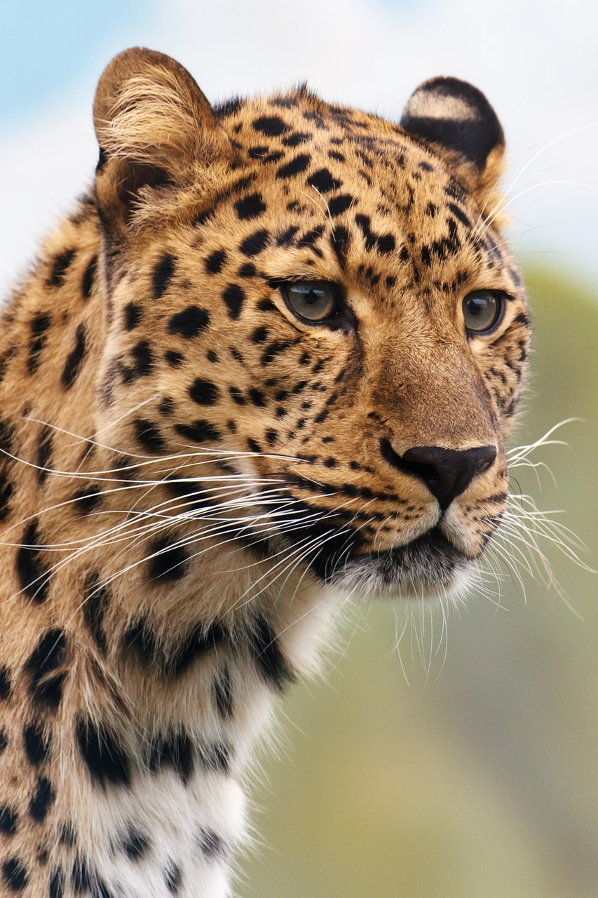 13 Of The Coolest Leopard Pictures