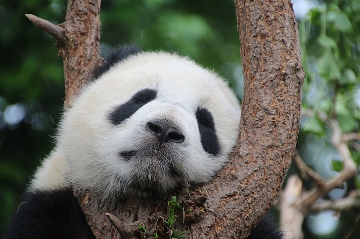 12 Of The Coolest Panda Pictures 1689648259