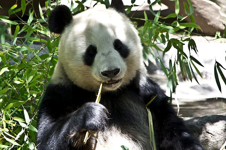 12 Of The Coolest Panda Pictures 39338004
