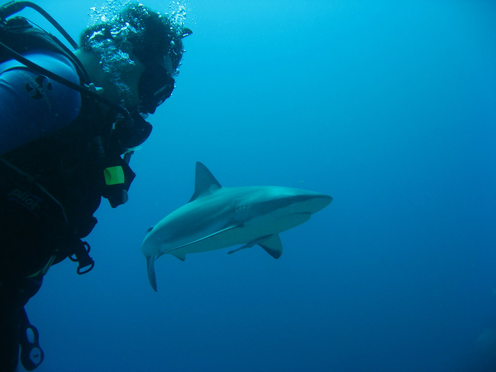 11 Of The Most Beautiful Shark Pictures 1010439058