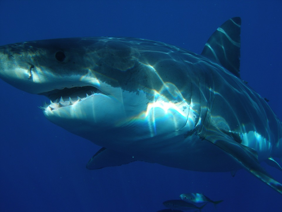11 Of The Most Beautiful Shark Pictures 106033702