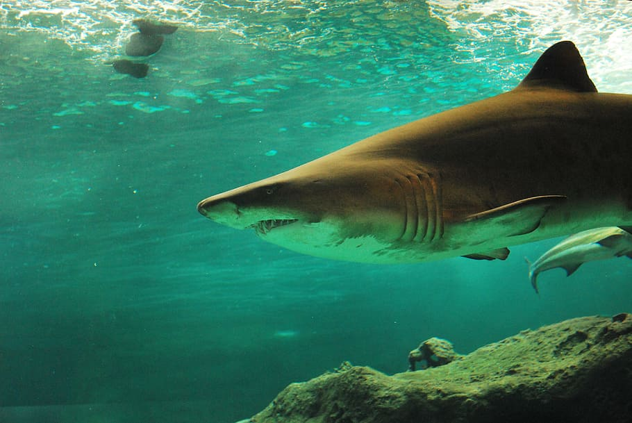 11 Of The Most Beautiful Shark Pictures 110813378