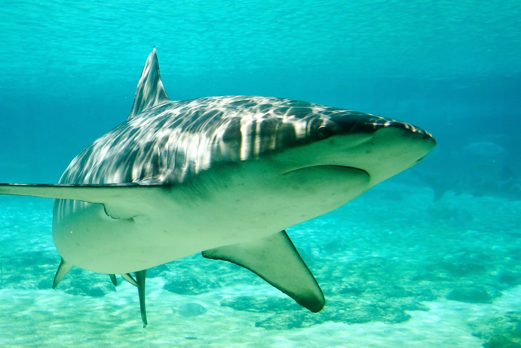 11 Of The Most Beautiful Shark Pictures 2037902516