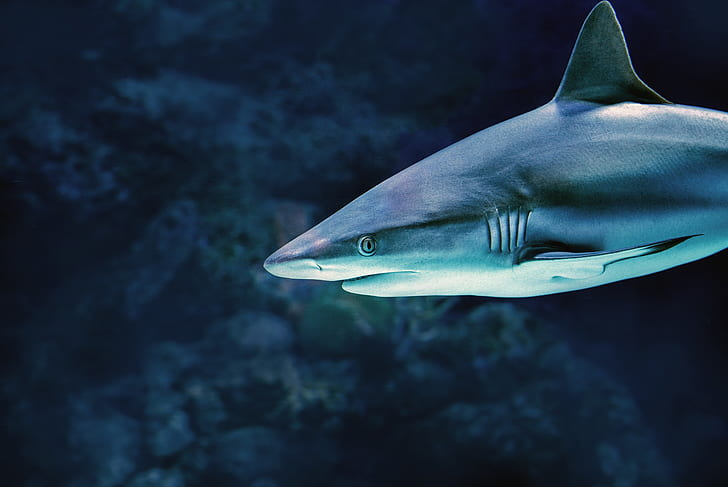 11 Of The Most Beautiful Shark Pictures 1746319787