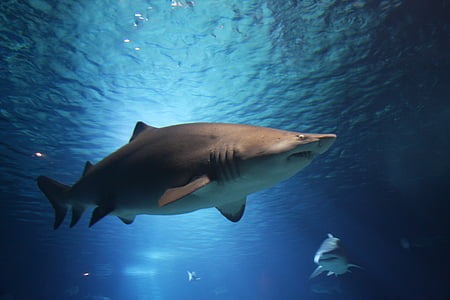 11 Of The Most Beautiful Shark Pictures