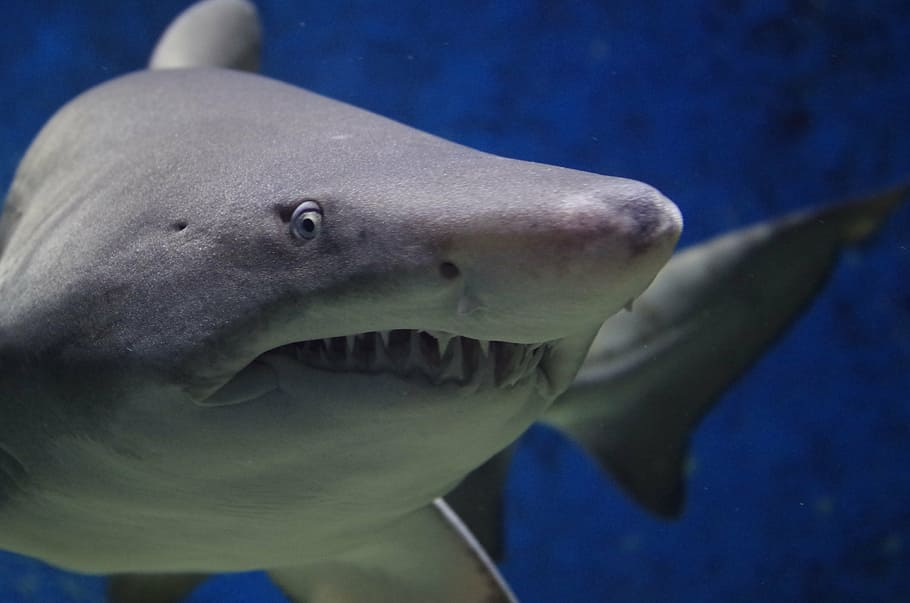 11 Of The Most Beautiful Shark Pictures 1452920560