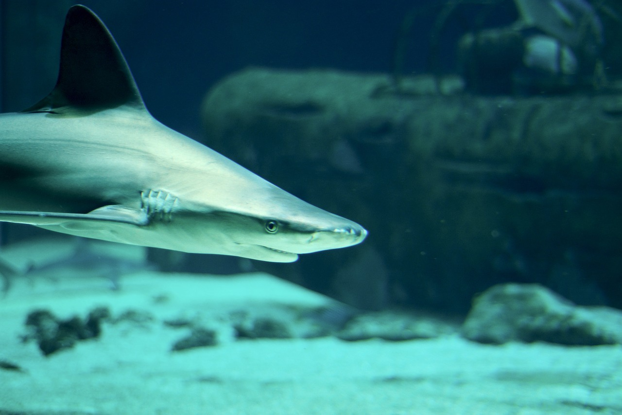 11 Of The Most Beautiful Shark Pictures 271336880