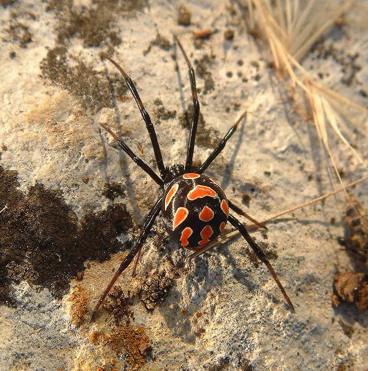 15 Top Pictures Of Spiders