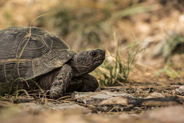 11 Of The Most Awesome Tortoise Pictures