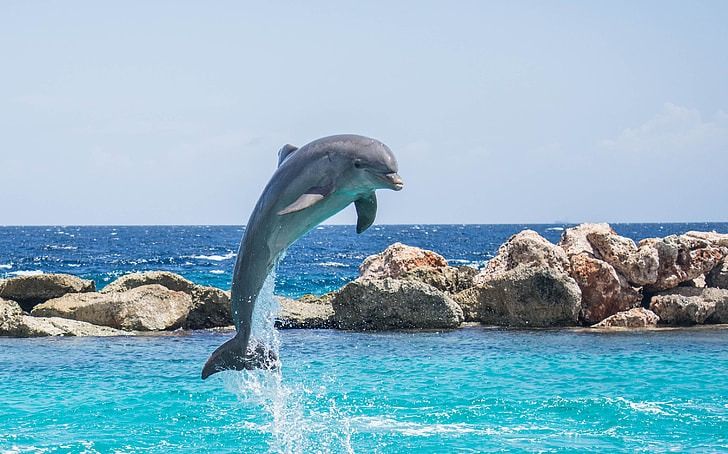 16 Of The Most Amazing Dolphin Pictures 752696412