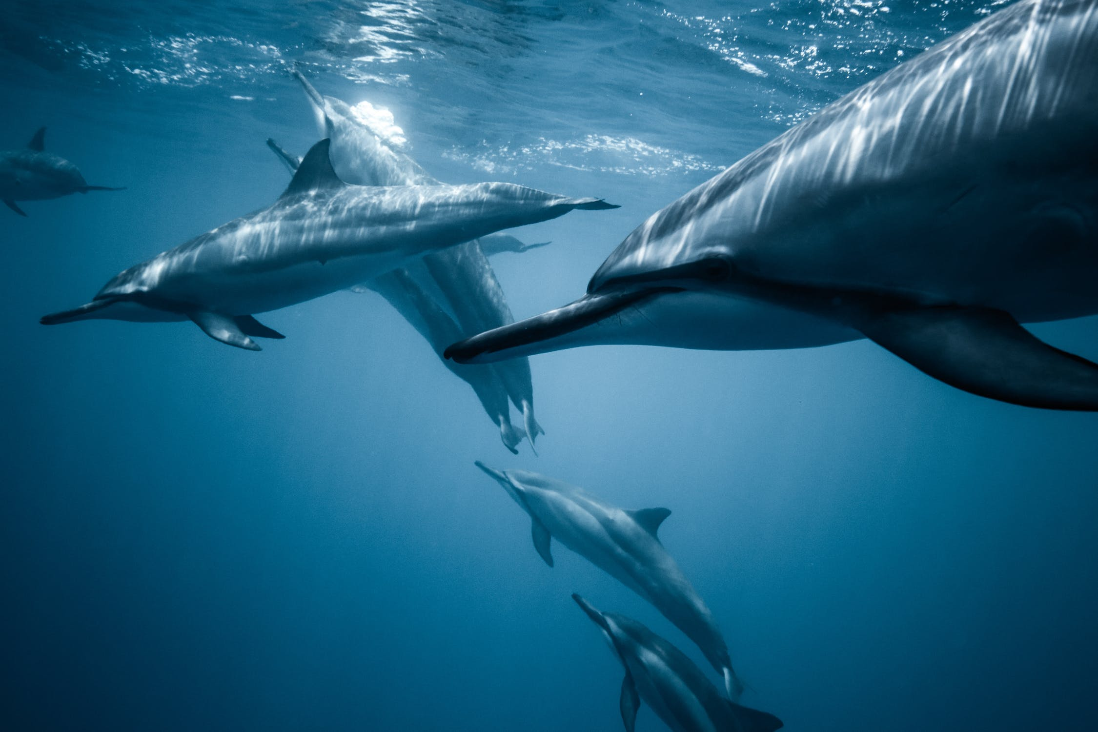 Cool Facts About Dolphin