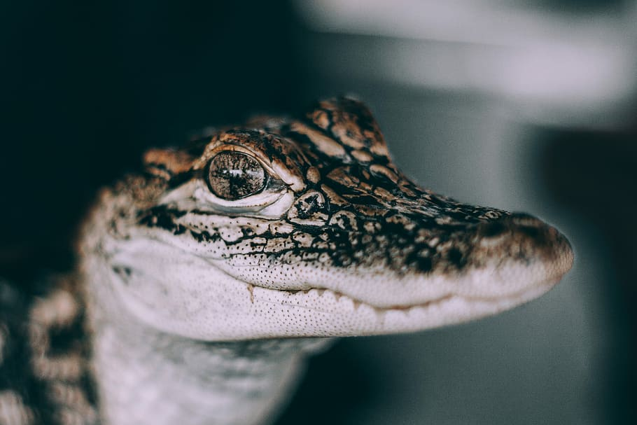 Surprising Facts About Estuarine Crocodiles 1341394049