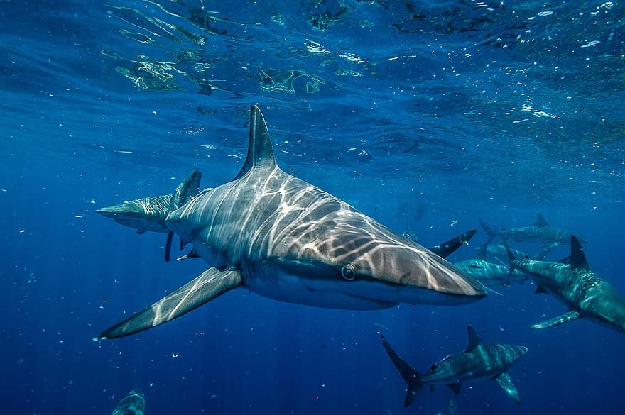 10 Of The Best Pictures Of The Great White Shark 2066740252